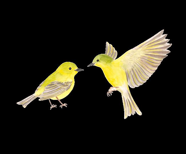 Two Yellow Birds. Super Rad.